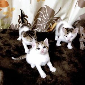 里親募集 仔猫